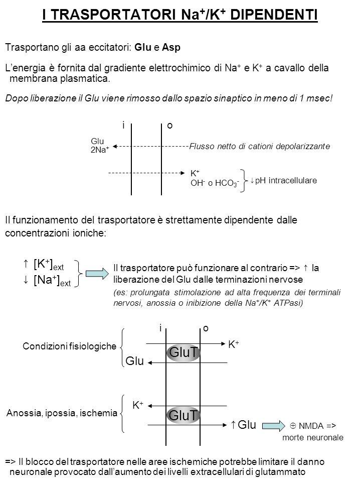 I TRASPORTATORI Na + /K + DIPENDENTI Trasportano gli aa eccitatori: Glu e Asp L'energia è fornita dal gradiente elettrochimico di Na + e K + a cavallo della membrana plasmatica.