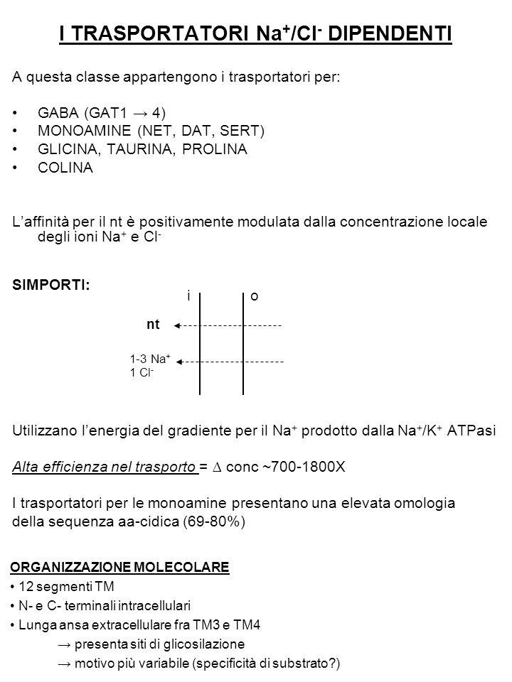 I TRASPORTATORI Na + /Cl - DIPENDENTI A questa classe appartengono i trasportatori per: GABA (GAT1 → 4) MONOAMINE (NET, DAT, SERT) GLICINA, TAURINA, P