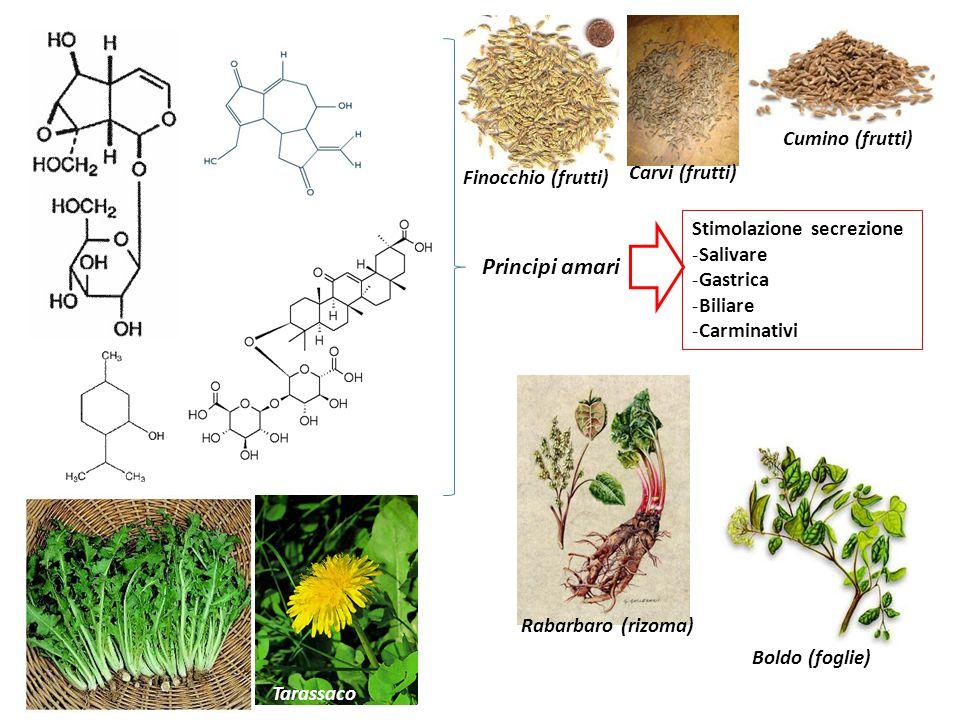 Principi amari Stimolazione secrezione -Salivare -Gastrica -Biliare -Carminativi Carvi (frutti) Finocchio (frutti) Rabarbaro (rizoma) Boldo (foglie) Cumino (frutti) Tarassaco