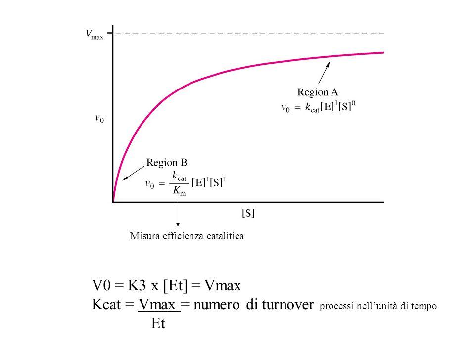 V0 = K3 x [Et] = Vmax Kcat = Vmax = numero di turnover processi nellunità di tempo Et Misura efficienza catalitica