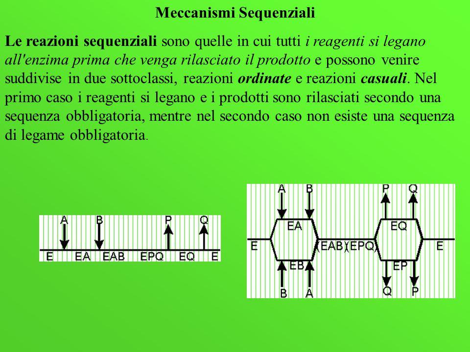 Meccanismi Sequenziali Le reazioni sequenziali sono quelle in cui tutti i reagenti si legano all'enzima prima che venga rilasciato il prodotto e posso