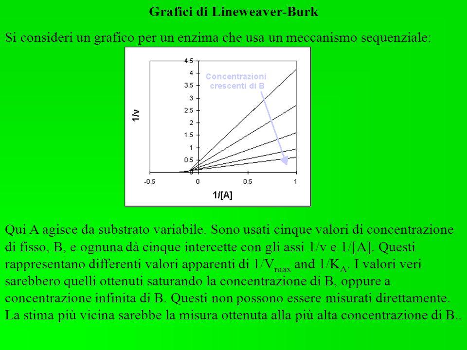 Grafici di Lineweaver-Burk Si consideri un grafico per un enzima che usa un meccanismo sequenziale: Qui A agisce da substrato variabile. Sono usati ci