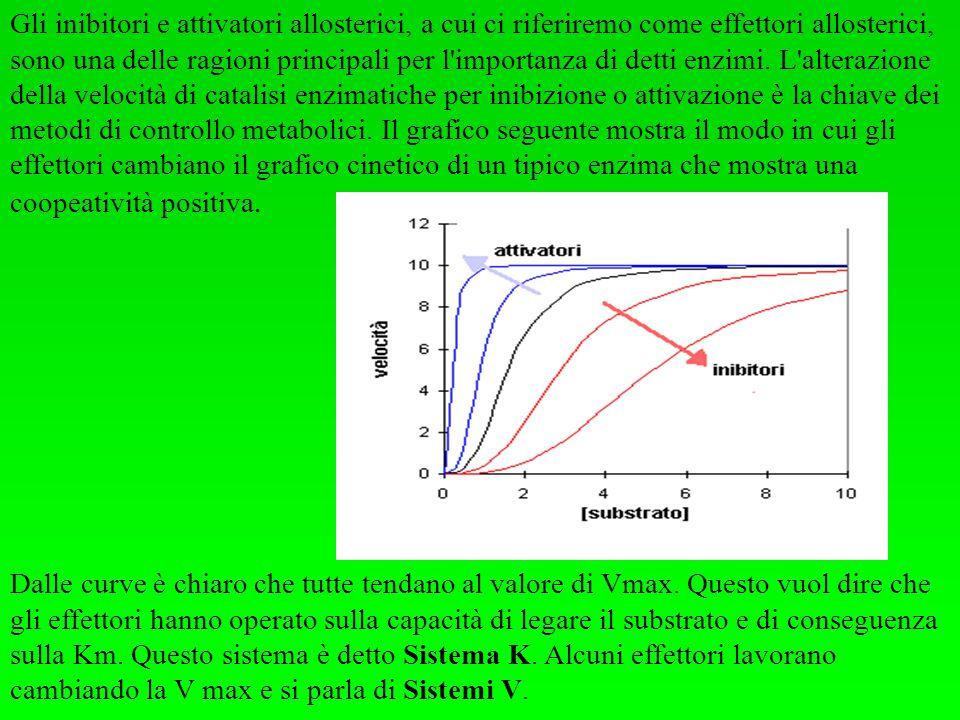Gli inibitori e attivatori allosterici, a cui ci riferiremo come effettori allosterici, sono una delle ragioni principali per l'importanza di detti en