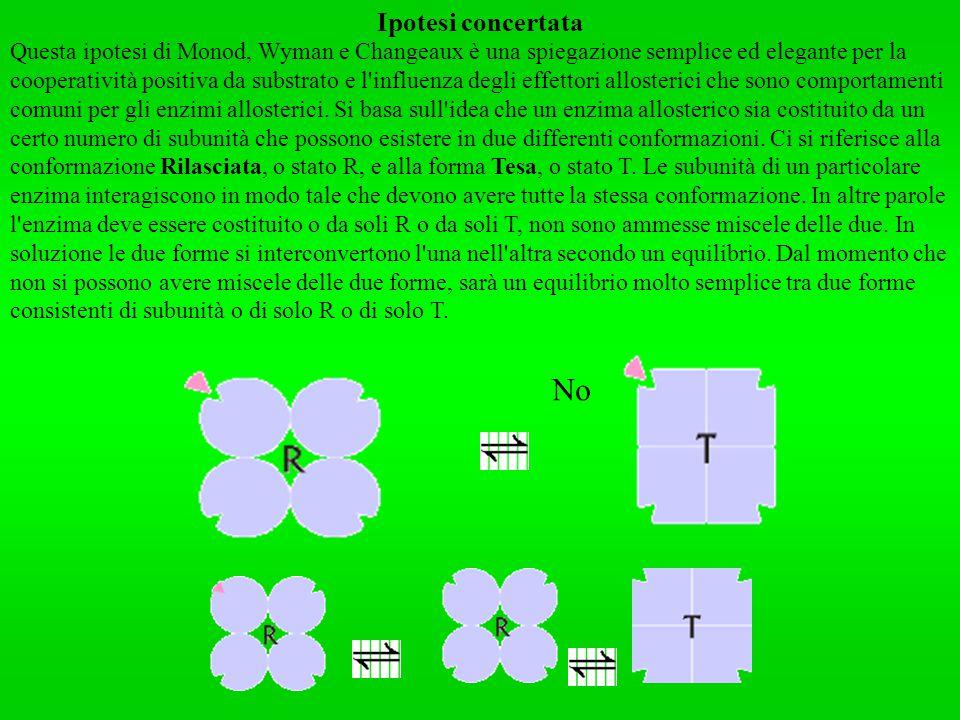 Ipotesi concertata Questa ipotesi di Monod, Wyman e Changeaux è una spiegazione semplice ed elegante per la cooperatività positiva da substrato e l'in