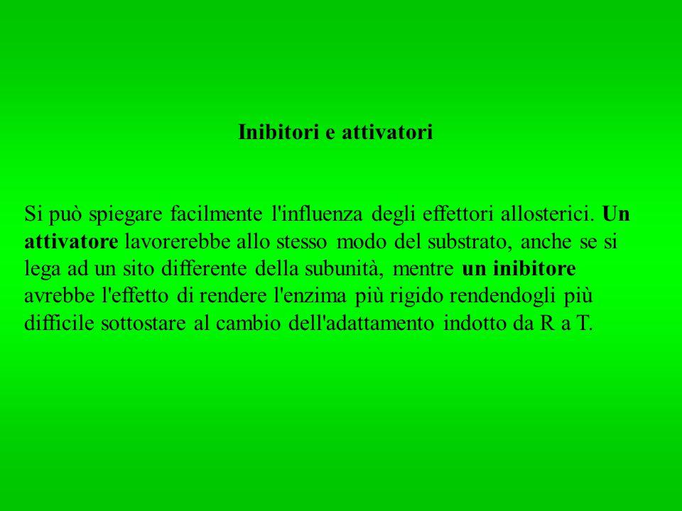 Inibitori e attivatori Si può spiegare facilmente l'influenza degli effettori allosterici. Un attivatore lavorerebbe allo stesso modo del substrato, a