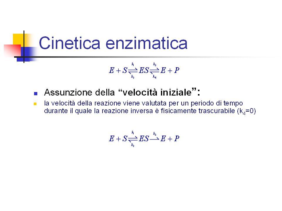 Inibitori e attivatori Si può spiegare facilmente l influenza degli effettori allosterici.