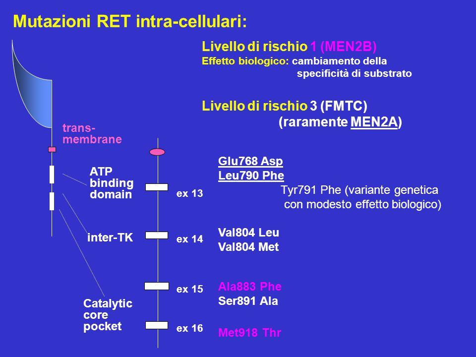ex 15 ex 13 ex 14 ex 16 Glu768 Asp Leu790 Phe Tyr791 Phe (variante genetica con modesto effetto biologico) Val804 Leu Val804 Met Ala883 Phe Ser891 Ala