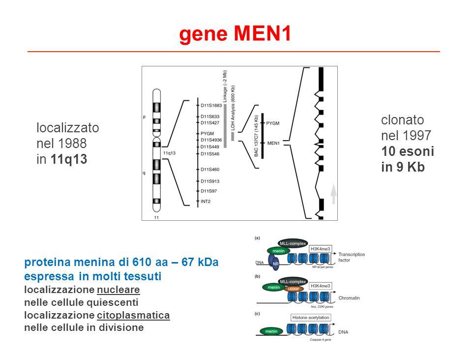 gene MEN1 clonato nel 1997 10 esoni in 9 Kb localizzato nel 1988 in 11q13 proteina menina di 610 aa – 67 kDa espressa in molti tessuti localizzazione