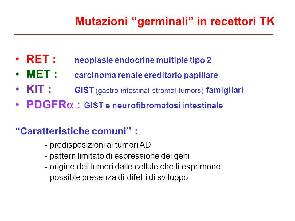ex 15 ex 13 ex 14 ex 16 Glu768 Asp Leu790 Phe Tyr791 Phe (variante genetica con modesto effetto biologico) Val804 Leu Val804 Met Ala883 Phe Ser891 Ala Met918 Thr trans- membrane Livello di rischio 1 (MEN2B) Effetto biologico: cambiamento della specificità di substrato ATP binding domain Catalytic core pocket inter-TK Mutazioni RET intra-cellulari: Livello di rischio 3 (FMTC) (raramente MEN2A)