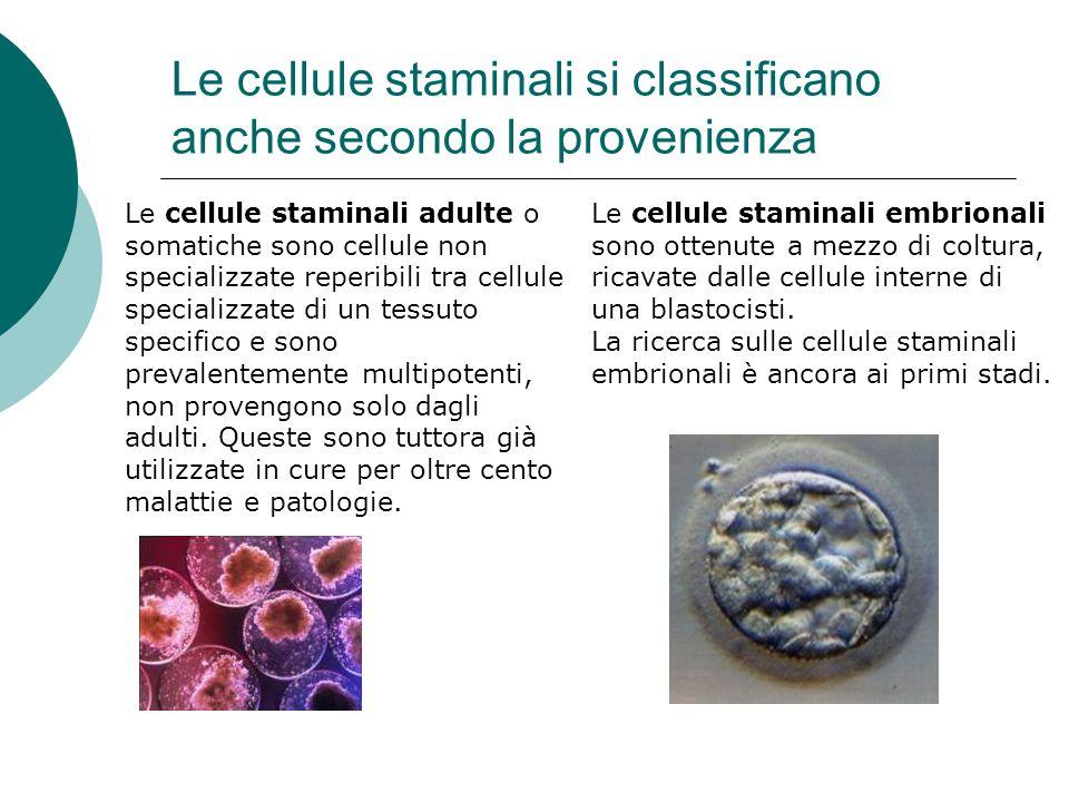 Le cellule staminali si classificano anche secondo la provenienza Le cellule staminali adulte o somatiche sono cellule non specializzate reperibili tr