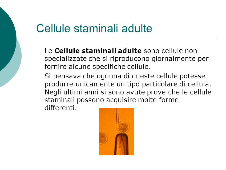 Cellule staminali adulte Le Cellule staminali adulte sono cellule non specializzate che si riproducono giornalmente per fornire alcune specifiche cell