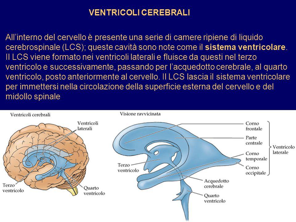 VENTRICOLI CEREBRALI Allinterno del cervello è presente una serie di camere ripiene di liquido cerebrospinale (LCS); queste cavità sono note come il s
