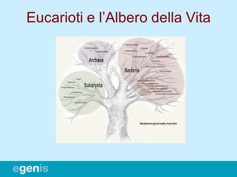 Eucarioti e lAlbero della Vita