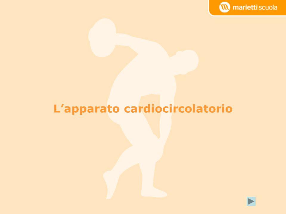 Lapparato cardiocircolatorio