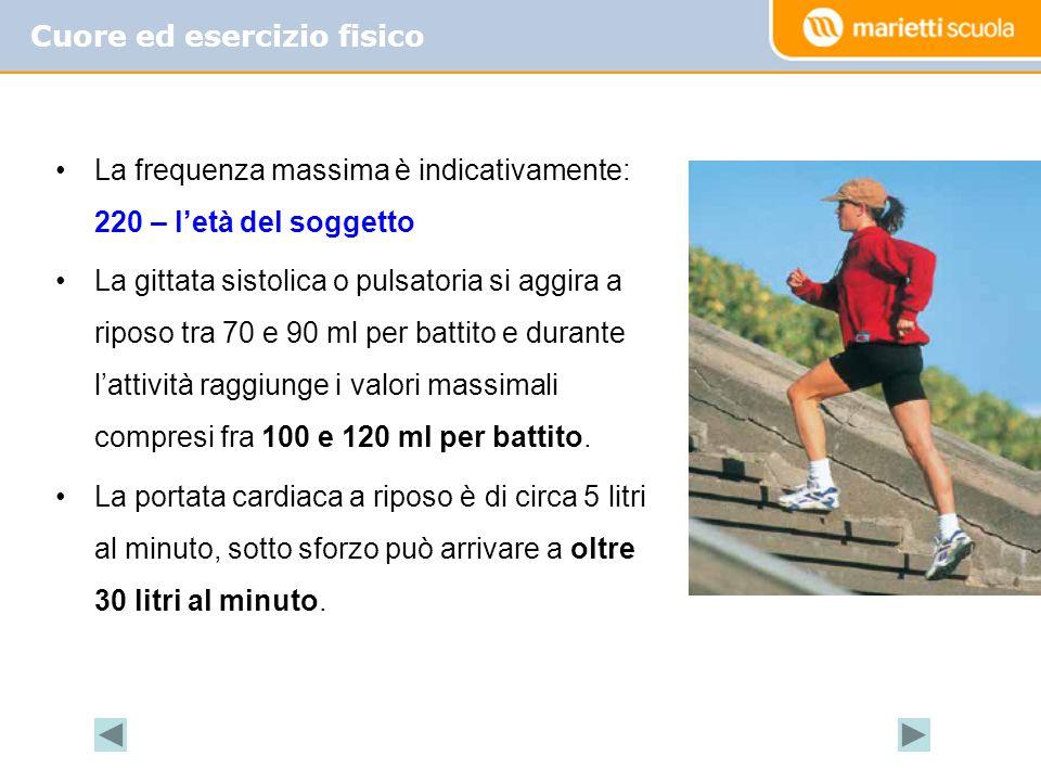 Cuore ed esercizio fisico La frequenza massima è indicativamente: 220 – letà del soggetto La gittata sistolica o pulsatoria si aggira a riposo tra 70