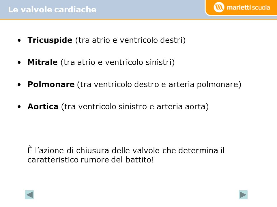 Tricuspide (tra atrio e ventricolo destri) Mitrale (tra atrio e ventricolo sinistri) Polmonare (tra ventricolo destro e arteria polmonare) Aortica (tr