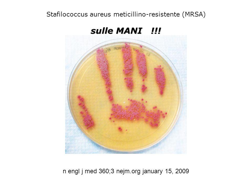 n engl j med 360;3 nejm.org january 15, 2009 Stafilococcus aureus meticillino-resistente (MRSA) sulle MANI !!!