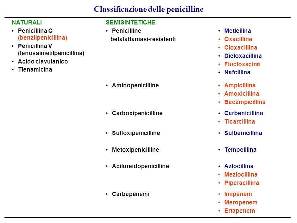 Classificazione delle penicilline NATURALI Penicillina G (benzilpenicillina) Penicillina V (fenossimetilpenicillina) Acido clavulanico Tienamicina SEM