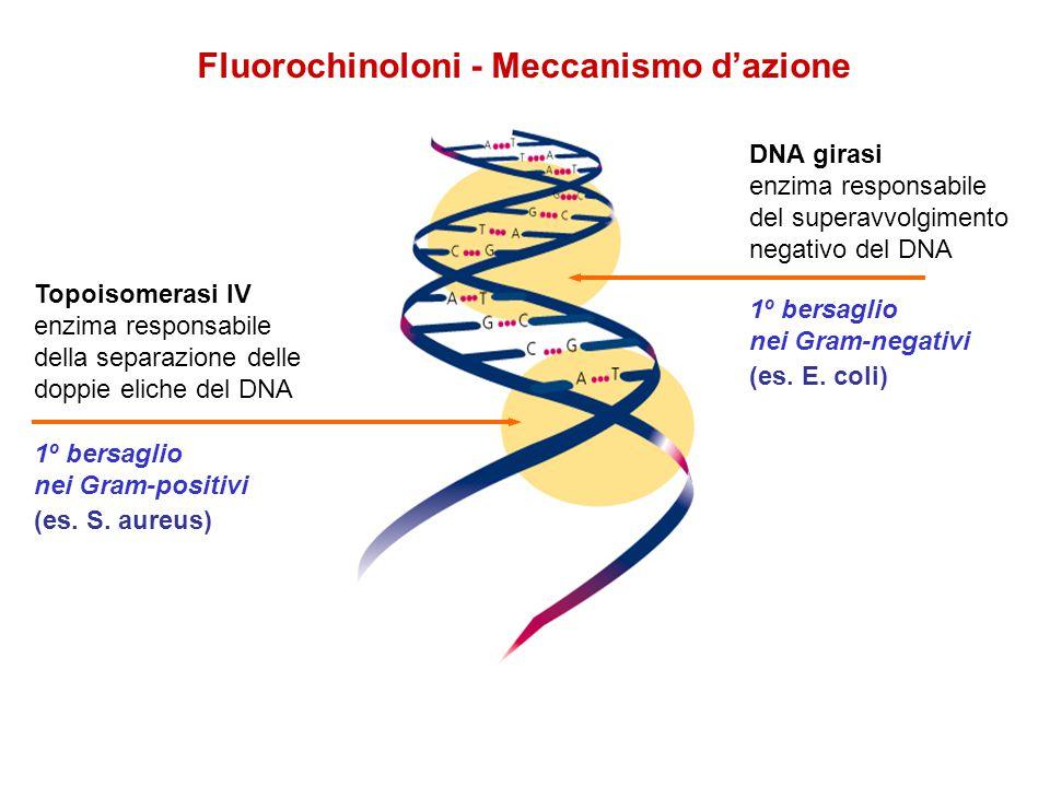 Fluorochinoloni - Meccanismo dazione DNA girasi enzima responsabile del superavvolgimento negativo del DNA 1º bersaglio nei Gram-negativi (es. E. coli