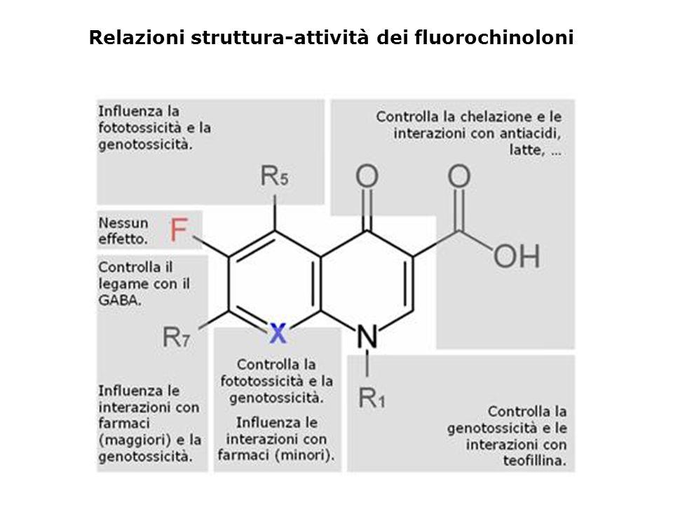 Relazioni struttura-attività dei fluorochinoloni