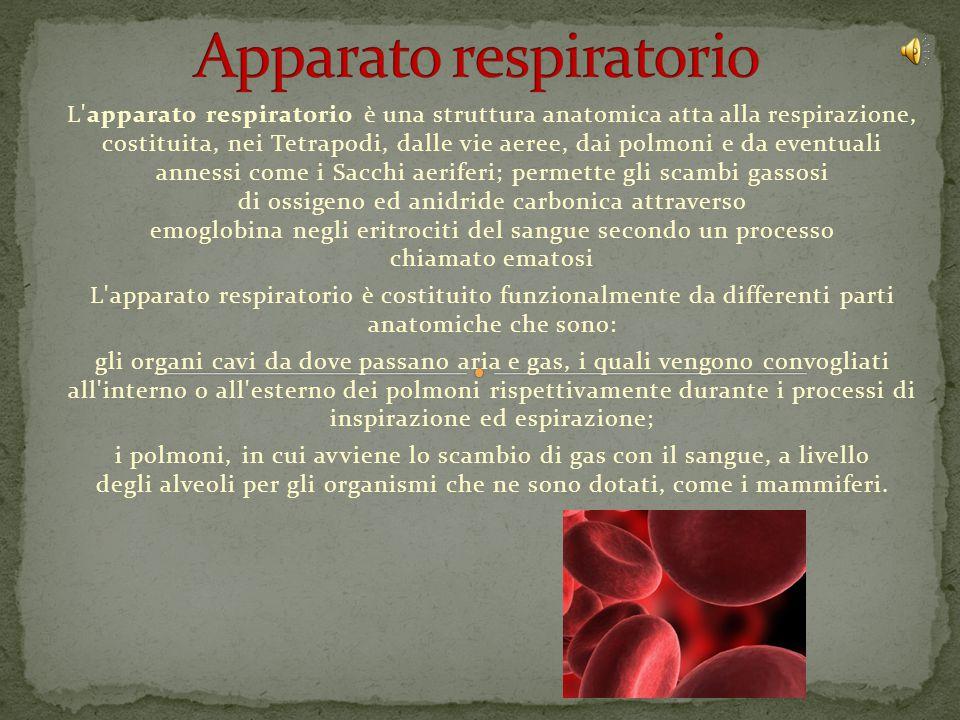 L apparato respiratorio è una struttura anatomica atta alla respirazione, costituita, nei Tetrapodi, dalle vie aeree, dai polmoni e da eventuali annessi come i Sacchi aeriferi; permette gli scambi gassosi di ossigeno ed anidride carbonica attraverso emoglobina negli eritrociti del sangue secondo un processo chiamato ematosi L apparato respiratorio è costituito funzionalmente da differenti parti anatomiche che sono: gli organi cavi da dove passano aria e gas, i quali vengono convogliati all interno o all esterno dei polmoni rispettivamente durante i processi di inspirazione ed espirazione; i polmoni, in cui avviene lo scambio di gas con il sangue, a livello degli alveoli per gli organismi che ne sono dotati, come i mammiferi.