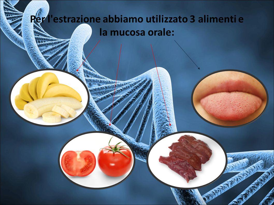 Per l estrazione abbiamo utilizzato 3 alimenti e la mucosa orale: