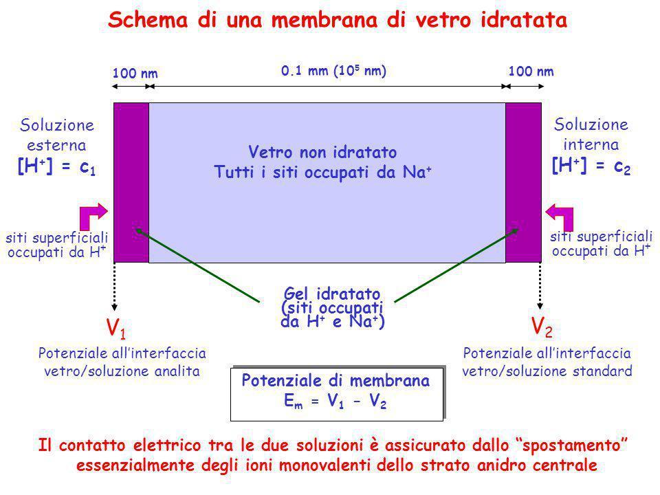 Schema di una membrana di vetro idratata Soluzione esterna [H + ] = c 1 Soluzione interna [H + ] = c 2 0.1 mm (10 5 nm) Vetro non idratato Tutti i sit