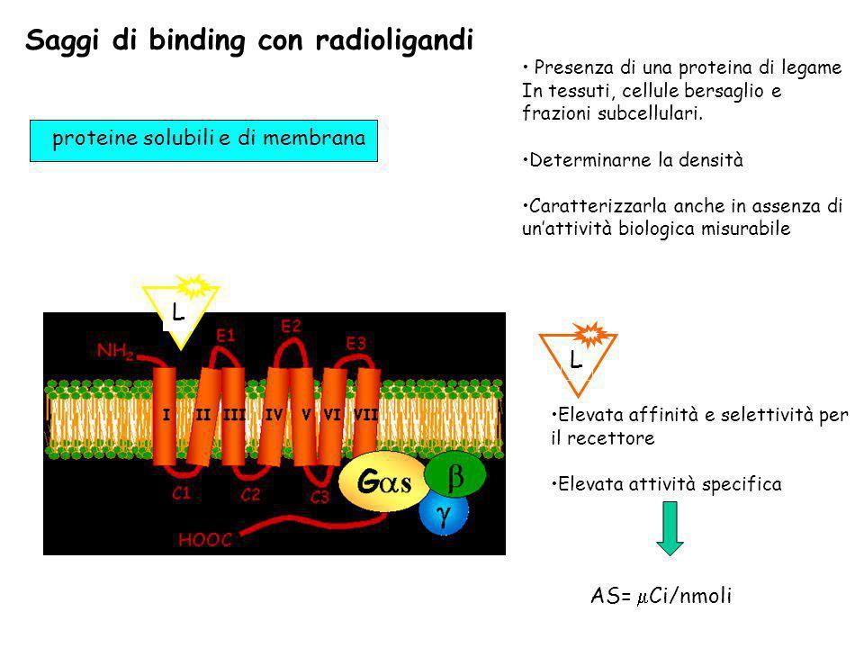 Saggi di binding con radioligandi L proteine solubili e di membrana Presenza di una proteina di legame In tessuti, cellule bersaglio e frazioni subcel
