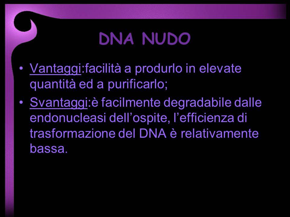 DNA NUDO Vantaggi:facilità a produrlo in elevate quantità ed a purificarlo; Svantaggi:è facilmente degradabile dalle endonucleasi dellospite, lefficie
