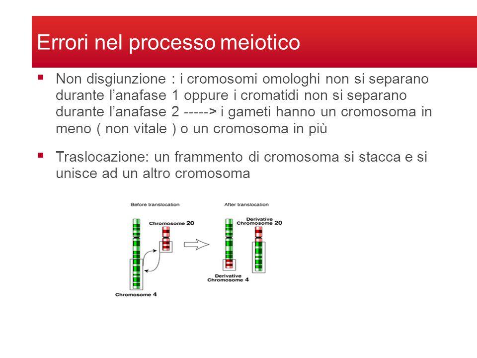 Delezione: durante il crossing over segmenti di cromosomi si staccano senza che si attacchi lomologo Duplicazione: durante il crossing over il segmento si stacca da un cromosoma e si attacca sullomologo Errori nel processo meiotico