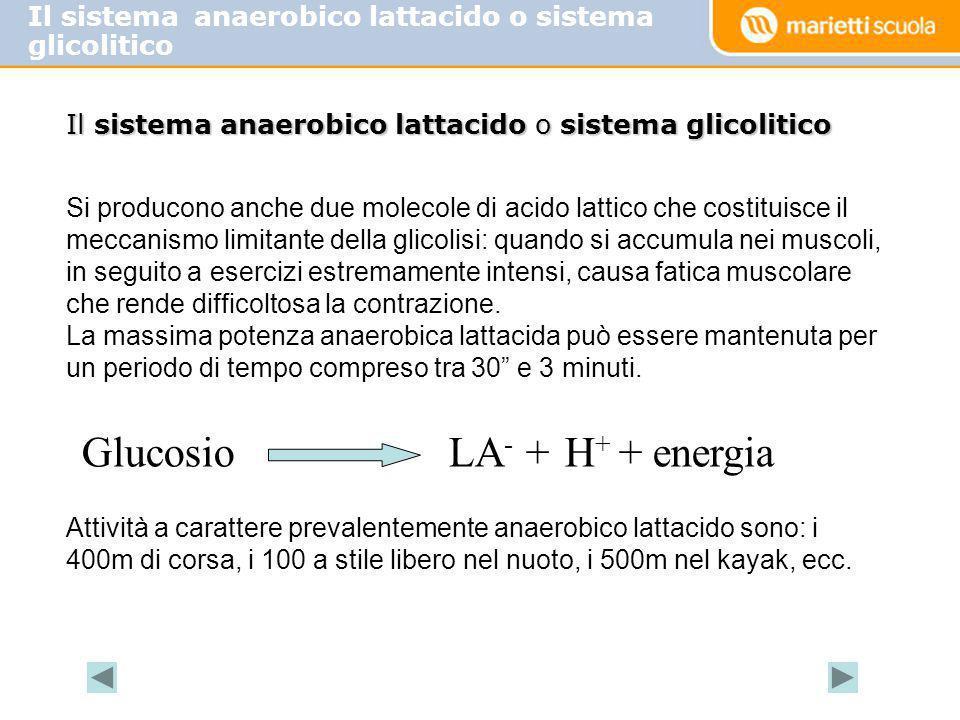 Il sistema anaerobico lattacido o sistema glicolitico Glucosio LA - + H + + energia Si producono anche due molecole di acido lattico che costituisce i
