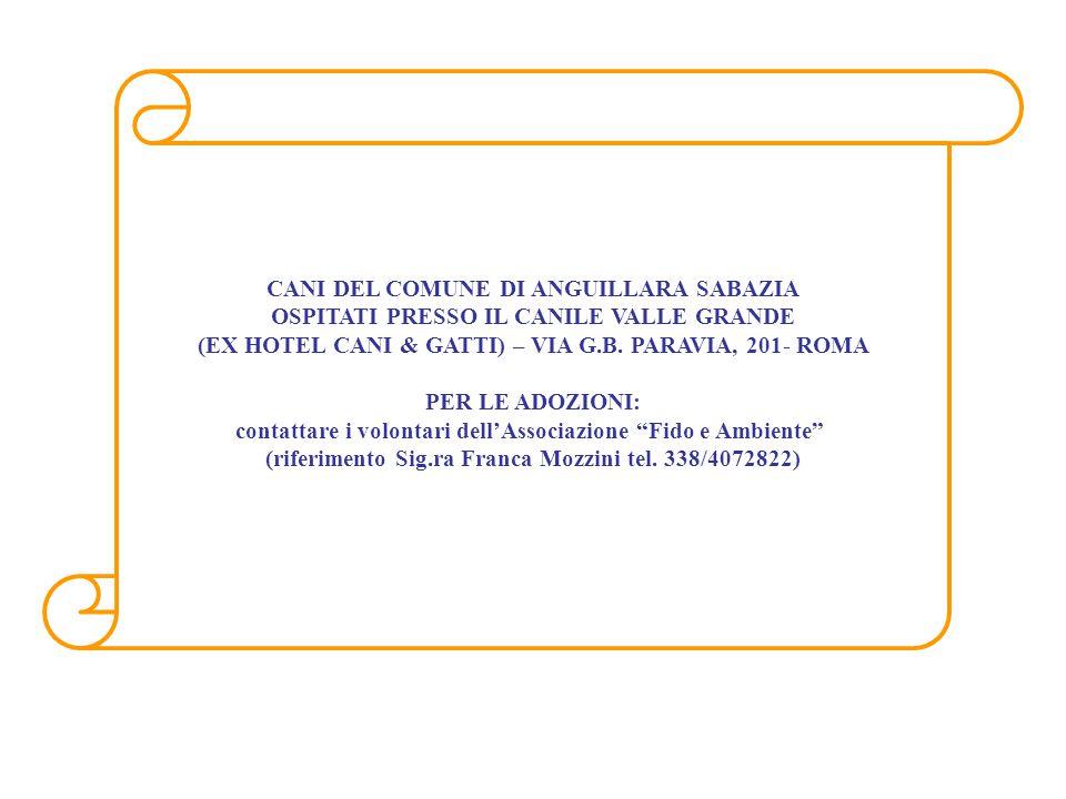 CANI DEL COMUNE DI ANGUILLARA SABAZIA OSPITATI PRESSO IL CANILE VALLE GRANDE (EX HOTEL CANI & GATTI) – VIA G.B. PARAVIA, 201- ROMA PER LE ADOZIONI: co