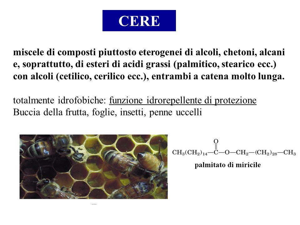 CERE miscele di composti piuttosto eterogenei di alcoli, chetoni, alcani e, soprattutto, di esteri di acidi grassi (palmitico, stearico ecc.) con alco