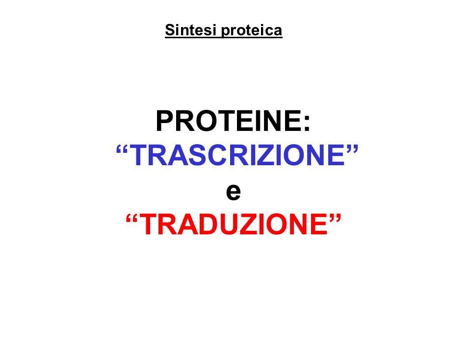 Sintesi proteica PROTEINE: TRASCRIZIONE e TRADUZIONE