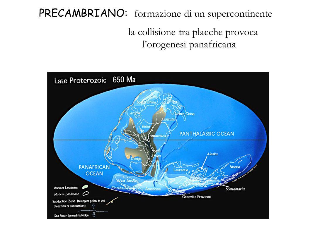 CAMBRIANO: il supercontinente Gondwana occupa lemisfero sud attorno allequatore si trovano tre continenti la collisione tra Nordamerica e Europa provoca lorogenesi caledonica e la chiusura del Protoatlantico, dando origine a un unico continente (Laurussia)
