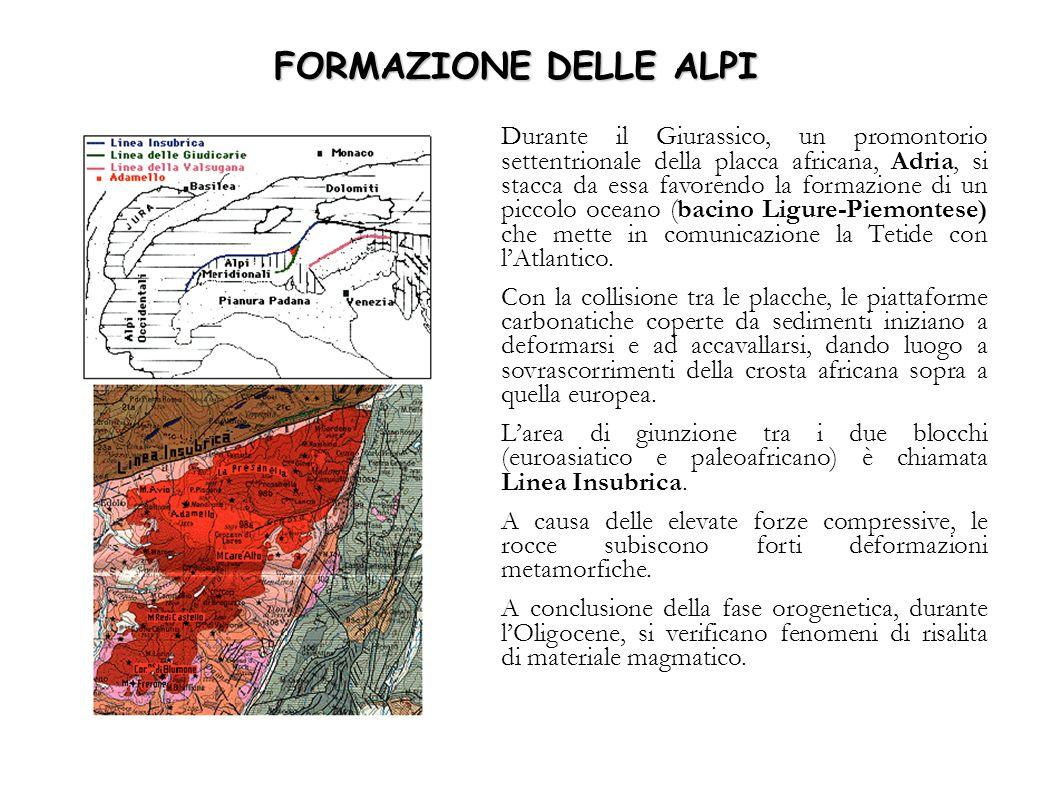 FORMAZIONE DELLE ALPI Durante il Giurassico, un promontorio settentrionale della placca africana, Adria, si stacca da essa favorendo la formazione di