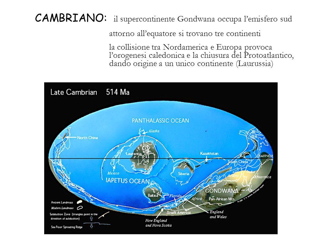 CAMBRIANO: il supercontinente Gondwana occupa lemisfero sud attorno allequatore si trovano tre continenti la collisione tra Nordamerica e Europa provo