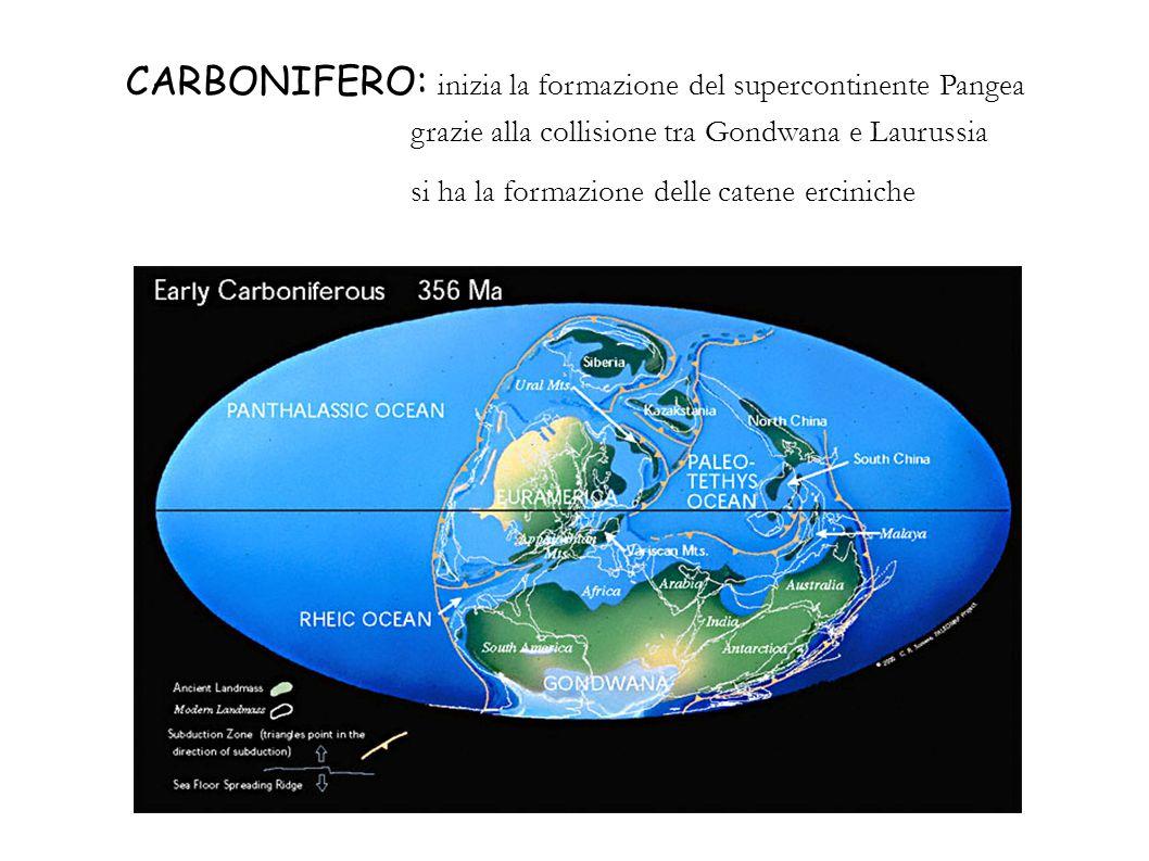 CARBONIFERO: inizia la formazione del supercontinente Pangea grazie alla collisione tra Gondwana e Laurussia si ha la formazione delle catene ercinich