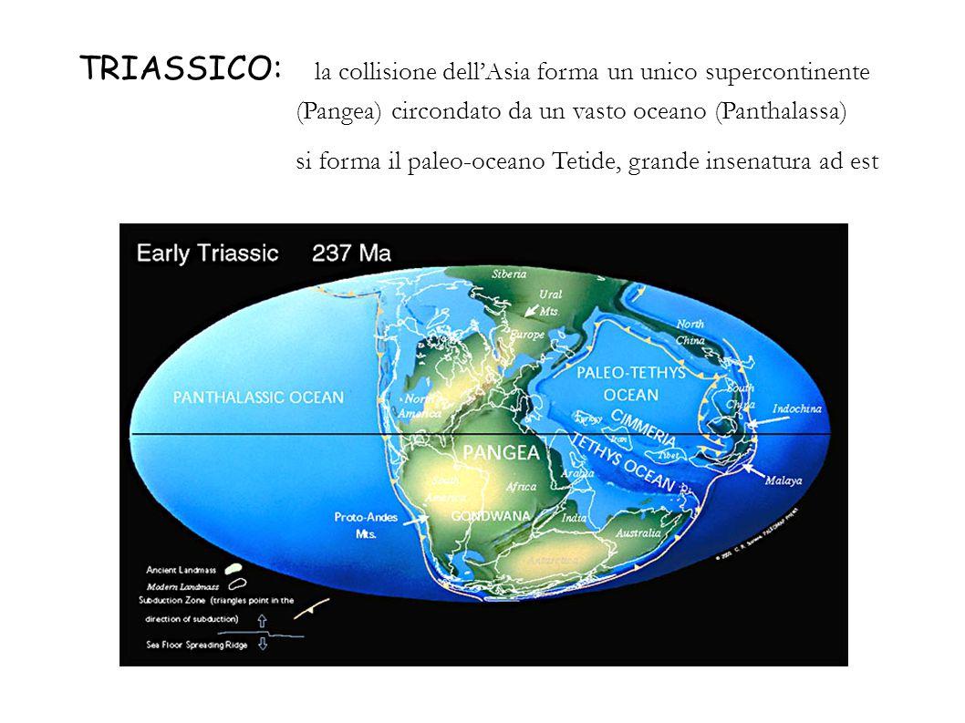 TRIASSICO: la collisione dellAsia forma un unico supercontinente (Pangea) circondato da un vasto oceano (Panthalassa) si forma il paleo-oceano Tetide,