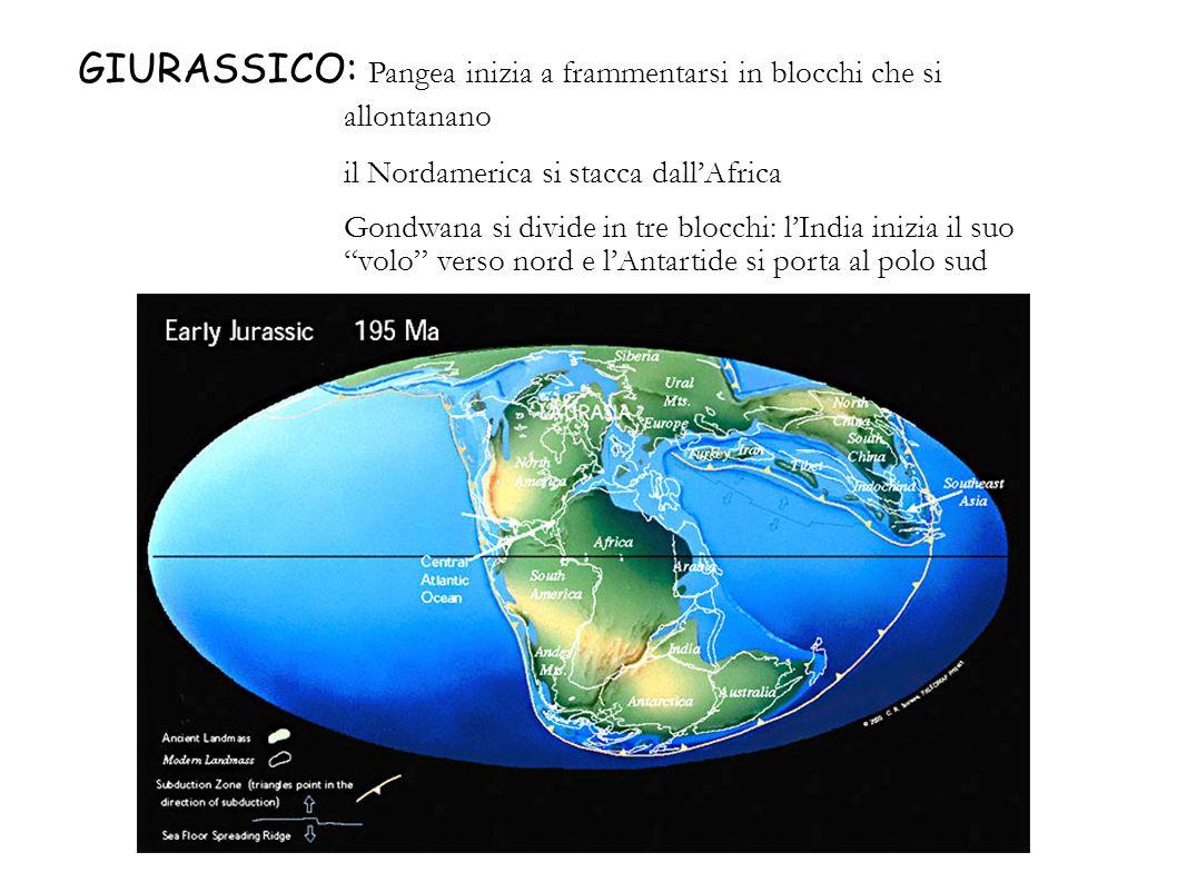 GIURASSICO: Pangea inizia a frammentarsi in blocchi che si allontanano il Nordamerica si stacca dallAfrica Gondwana si divide in tre blocchi: lIndia i