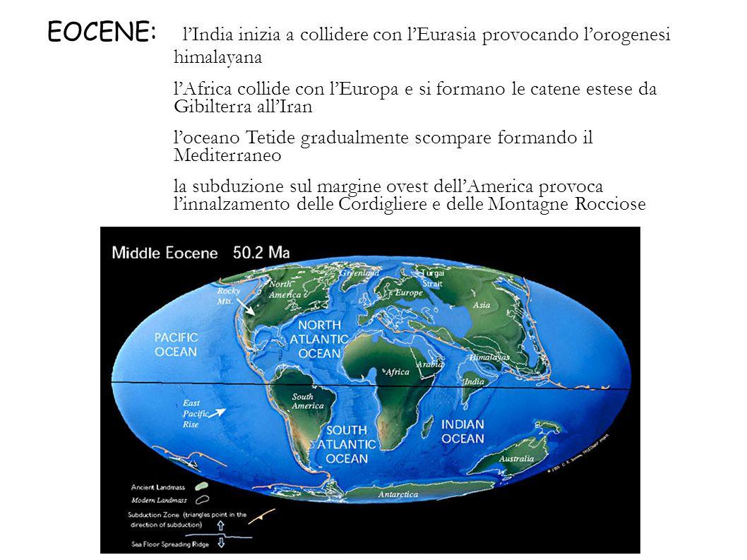 EOCENE: lIndia inizia a collidere con lEurasia provocando lorogenesi himalayana lAfrica collide con lEuropa e si formano le catene estese da Gibilterr