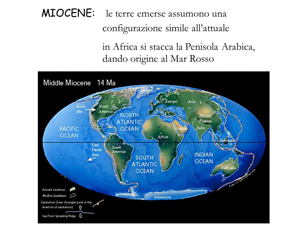 MIOCENE: le terre emerse assumono una configurazione simile allattuale in Africa si stacca la Penisola Arabica, dando origine al Mar Rosso
