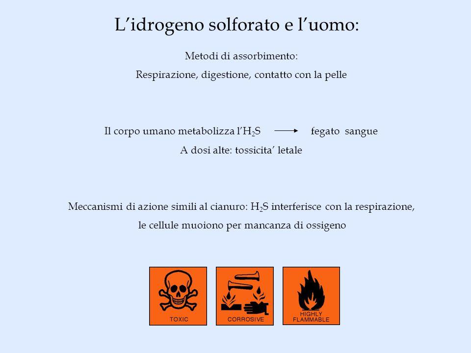 Lidrogeno solforato e luomo: Metodi di assorbimento: Respirazione, digestione, contatto con la pelle Il corpo umano metabolizza lH 2 S fegato sangue A
