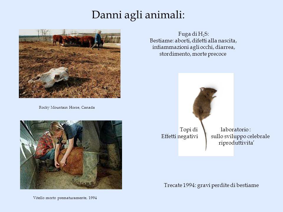 Danni agli animali: Rocky Mountain Horse, Canada Fuga di H 2 S: Bestiame: aborti, difetti alla nascita, infiammazioni agli occhi, diarrea, stordimento