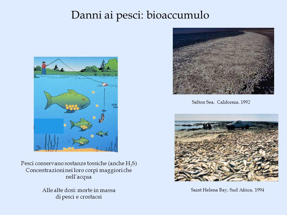 Danni ai pesci: bioaccumulo Pesci conservano sostanze tossiche (anche H 2 S) Concentrazioni nei loro corpi maggiori che nellacqua Alle alte dosi: morte in massa di pesci e crostacei Saint Helena Bay, Sud Africa, 1994 Salton Sea, California, 1992