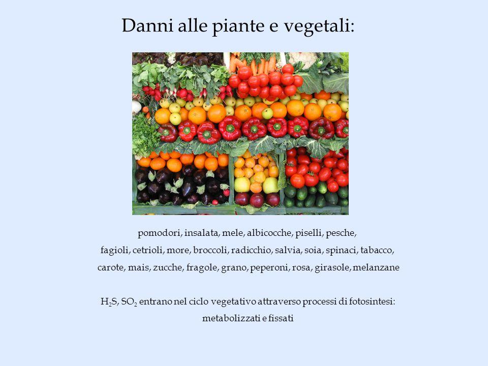 Danni alle piante e vegetali: pomodori, insalata, mele, albicocche, piselli, pesche, fagioli, cetrioli, more, broccoli, radicchio, salvia, soia, spinaci, tabacco, carote, mais, zucche, fragole, grano, peperoni, rosa, girasole, melanzane H 2 S, SO 2 entrano nel ciclo vegetativo attraverso processi di fotosintesi: metabolizzati e fissati