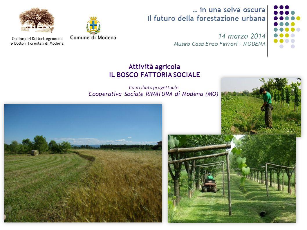 … in una selva oscura Il futuro della forestazione urbana 14 marzo 2014 Museo Casa Enzo Ferrari - MODENA Attività agricola IL BOSCO FATTORIA SOCIALE C