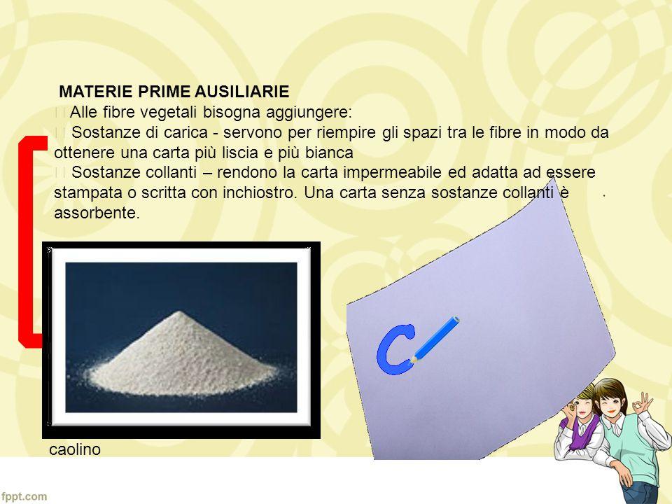 La risorsa primaria per fabbricare la carta sono gli alberi, da cui si ricava la cellulosa. Gli alberi piu utilizzati sono il pioppo, labete, la betul
