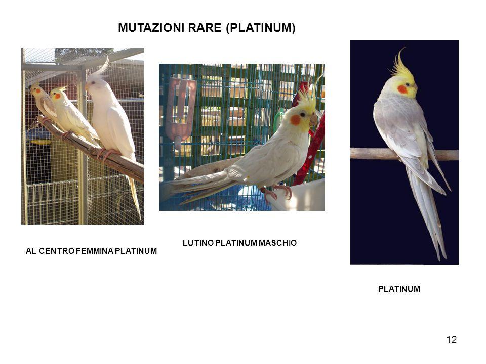 13 PLATINUM MASCHIO PLATINUM FEMMINA MUTAZIONI RARE (PLATINUM)