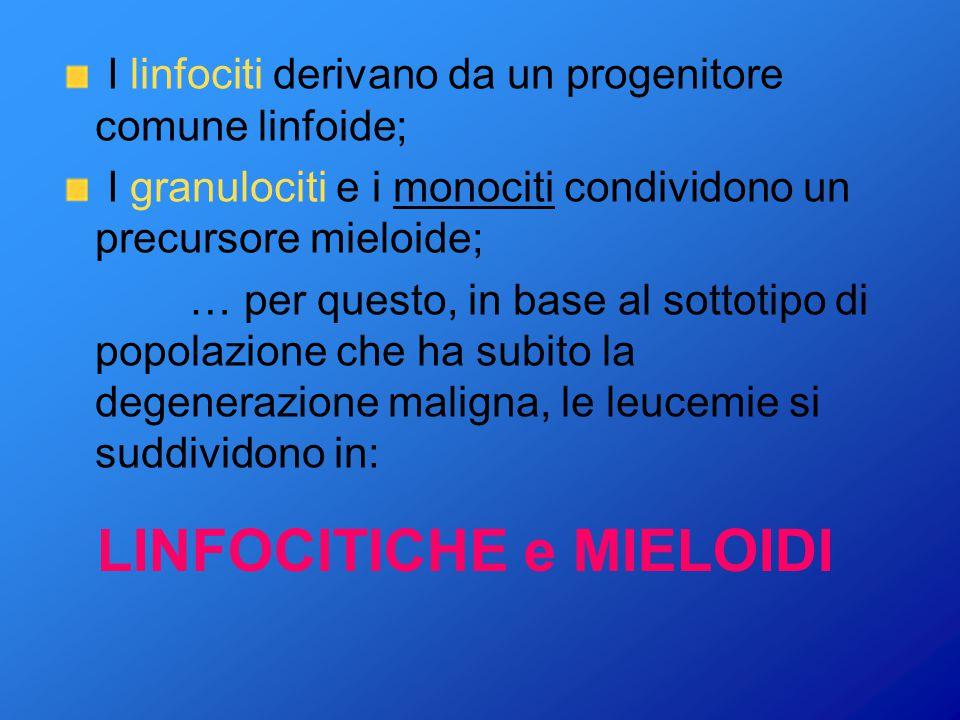 I LEUCOCITI I leucociti adulti circolanti nel sangue, in realtà, sono costituiti da molte sottofamiglie: linfociti T e linfociti B; leucociti neutrofi